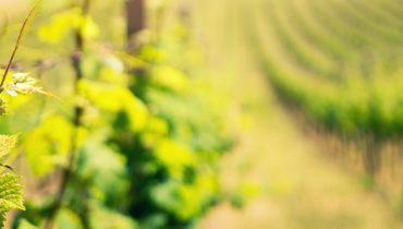 Was sind die Chancen auf dem Weinmarkt nach COVID-19?
